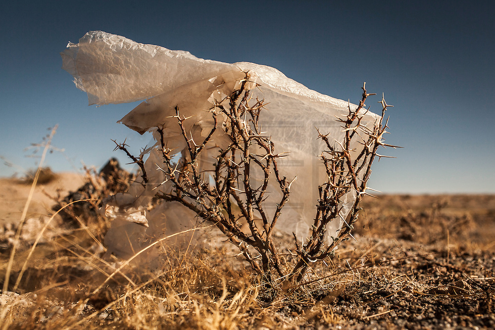 08/11/2014 - Uyuni, Bolivia:Plastic tree #14. Plastic bags are part of the landscape of the Bolivian Altiplano. The accumulation of plastic bags on the environment cause deterioration of the landscapes and agriculture soils and it is associated to the death of domestic and wild animals.