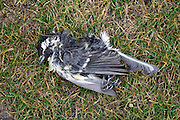 dead bird on grass