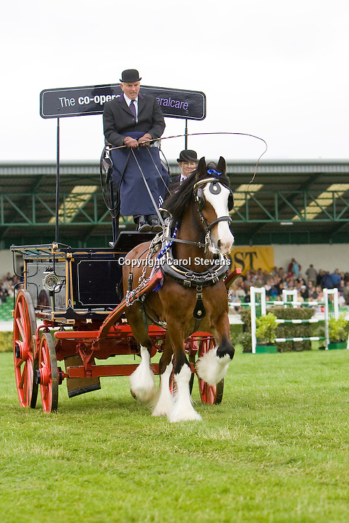 Great Yorkshire Show 2010  Heavy Horse Single Turnout
