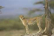 Roy Toft Photo Safaris Print Collection