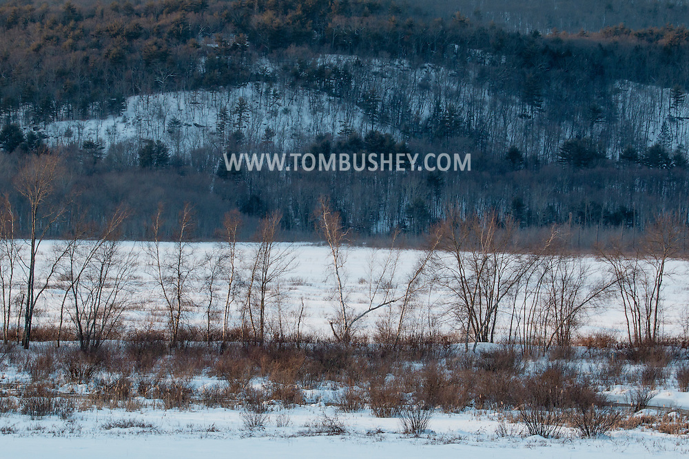 Mamakating, New York - Late-afternoon sunlight shines on birch trees along a trail at the Bashakill Wildlife Management Area on Feb. 15, 2015.