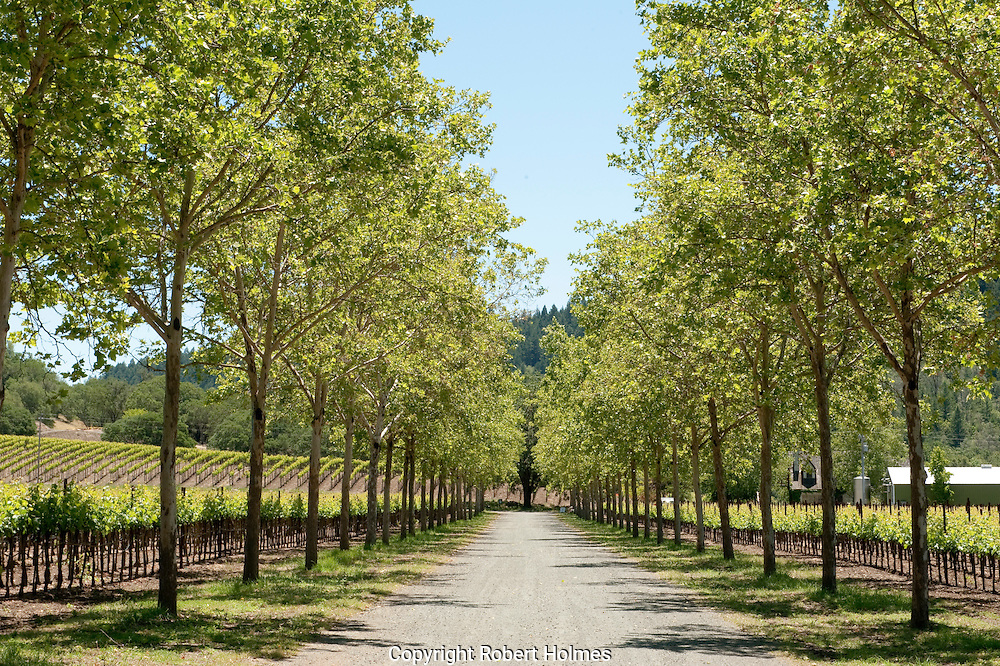 Anderson's Conn Valley winery, Howell Mountain, Napa, California