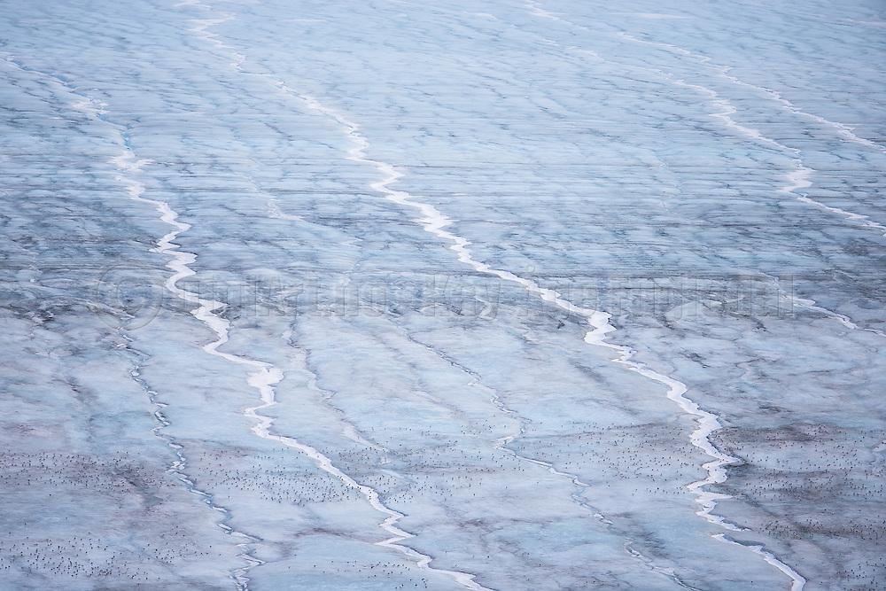 Thousands of birds sitting on a glacier with pattern   Tusenvis av fugler sitter på en isbre med mønster.