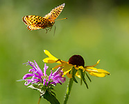 BUTTERFLIES WITH WILDFLOWERS AND SPACE