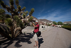 Adult male photographer examines Joshua Tree, Death Valley National Park, California, United States of America