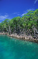 Mangroves over turquoise waters