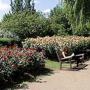 Regent's Park is one of the Royal Parks of London partly in the City of Westminster and partly in the London Borough of Camden. The 166 hectare park including gardens, a lake with a heronry, waterfowl and a boating area, sports pitches, and children's playgrounds; the London Zoo and the headquarters of the Zoological Society of London. A girl reading in Regent's Park