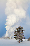 Old Faithful erupting during winter in Yellowstone