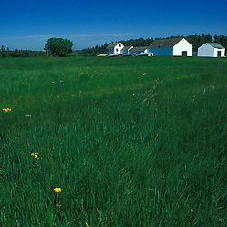 One of the hayfields on the Meserve Farm in Scarborough, Maine.  The 1890's farmhouse and barn are in distance.  Spring. Southern Maine.
