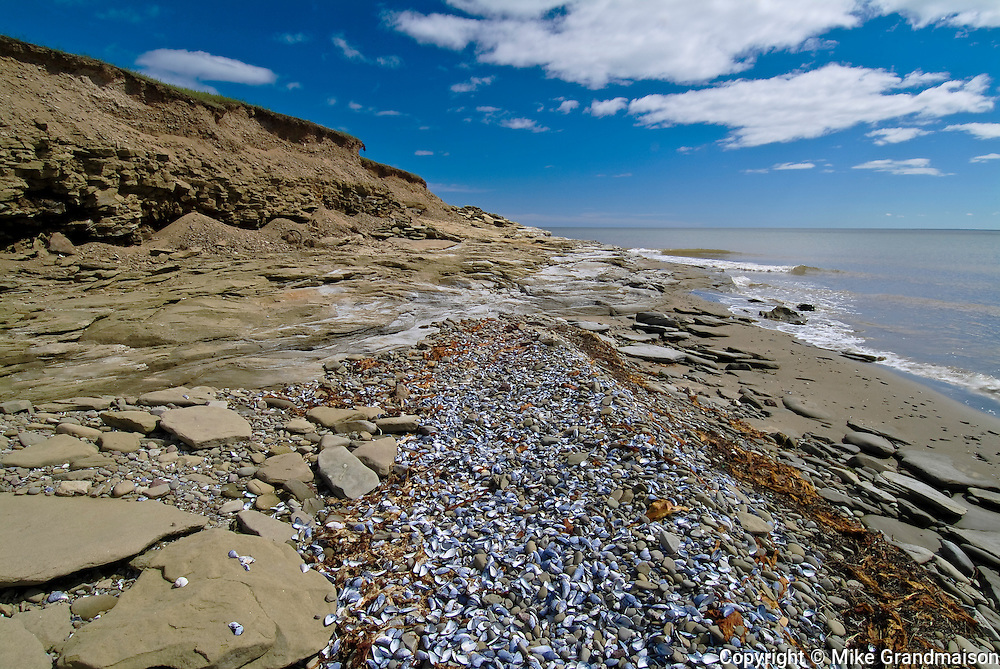 mussels on coast of Strait of Northumberland<br /> Cap Lumiere<br /> New Brunswick<br /> Canada
