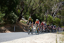 Lucy Kennedy (AUS) leads the bunch up the Stirling climb at Stage 3 of 2020 Santos Women's Tour Down Under, a 109.1 km road race from Nairne to Stirling, Australia on January 18, 2020. Photo by Sean Robinson/velofocus.com