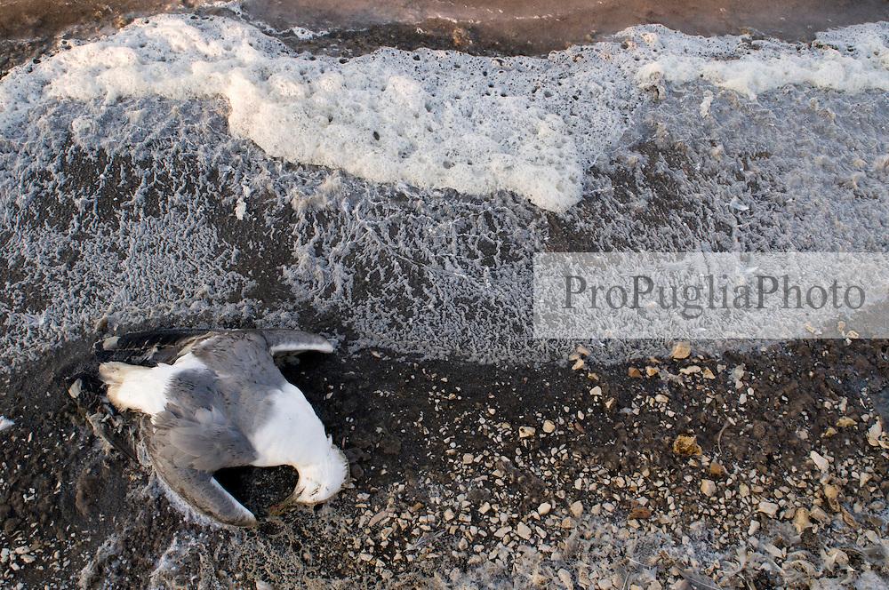 Il complesso produttivo delle saline è situato nel comune italiano di Margherita di Savoia (nome dato dagli abitanti in onore alla regina d'Italia che molto si adoperò nei confronti dei salinieri) nella provincia di Barletta-Andria-Trani in Puglia. Sono le più grandi d'Europa e le seconde nel mondo, in grado di produrre circa la metà del sale marino nazionale (500.000 di tonnellate annue).All'interno dei suoi bacini si sono insediate popolazioni di uccelli migratori e non, divenuti stanziali quali il fenicottero rosa, airone cenerino, garzetta, avocetta, cavaliere d'Italia, chiurlo, chiurlotello, fischione, volpoca..Un gabbiano morto sulla riva di un bacino tra scie di schiuma e sale. I gabbiano sono tra gli uccelli maggiormente presenti nell'area.
