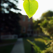 Light shines though a leaf on the campus of New World College in Montezuma, New Mexico.