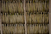 Palm Leaf Roof<br /> San Pedro<br /> Ambergris Caye<br /> Belize<br /> Central America