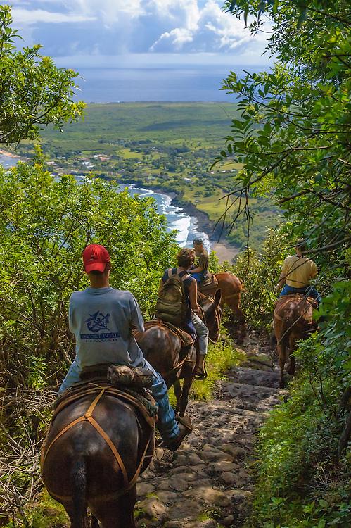 Molokai Mule Ride tour to Kalaupapa National Historic Park; Molokai, Hawaii.