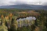 View over Uath Lochans surrounded by pine forest looking towards the Cairngorm mountains, Highlands, Scotland, UK