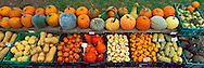 Pumpkins, Peconic, NY  archival pigment on canvas 20x60 inches, edition of 6, $1200  print $1000