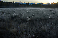 Frost at sunrise from Big Prairie in fall. Glacier National Park, northwest Montana.