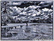 Scenic Landscape on Reelfoot Lake Reel Foot Lake
