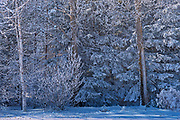 Snow and hoarfrost on trees<br />Near Deacon's Corner<br />Manitoba<br />Canada