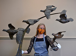 Pictured: Romey Clark from Bonham's prepares the Grouse Covey.<br /> <br /> A large bronze artwork called 'Grouse Covey' by artist Hamish Mackie, features in the sporting sale at Bonham's Auctioneers in Edinburgh. It is estimated at £2000 - £3000 GBP.<br /> <br /> © Dave Johnston / EEm