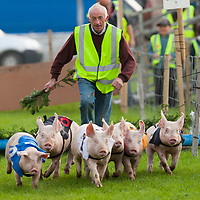 """Pat """"Birdie"""" Considine gets the pig racing of to a flying start during this years Festival of Fun in Kilmihil"""