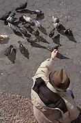 overhead view of man feeding pigeons