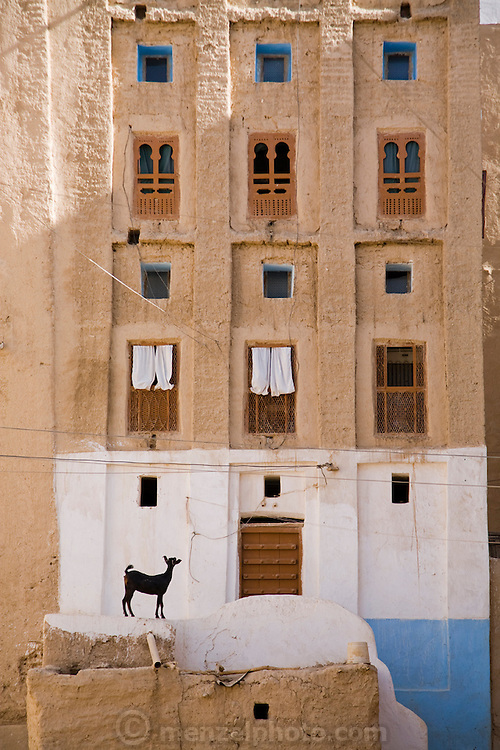 "A goat stands outside an apartment in Shibam, Hadhramawt, Yemen. Shibam is a World Heritage Site. The old walled city with it's talk mud brick buildings has been called 'the Manhattan of the desert""."