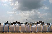 Rice bags lined up at rice drying platform near Astusuare, Ghana.