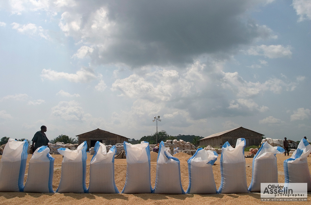 Rice bags lined up at rice drying platform near Astusuare, Ghana.