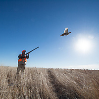 pheasant hunting grasslands, upland game bird hunting aguila pheasant hunting
