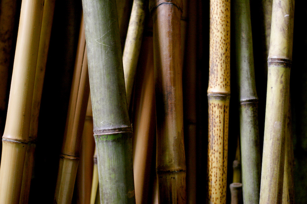 Belo Horizonte - MG, Brasil...BAMCRUS - Bambuzeria Cruzeiro do Sul em Belo Horizonte. Na foto detalhe de bambus...BAMCRUS - Bambuzeria Cruzeiro do Sul in Belo Horizonte. In this photo detail of bamboos...FOTO: LEO DRUMOND / NITRO