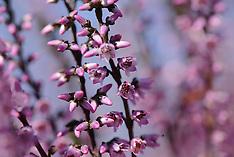 Ericaceae, heifamilie