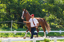 Glenn Geerts, (BEL), Antonio, Ozora Rangos, Red, Scampolo 49, Watapatja - Horse Inspection Driving - Alltech FEI World Equestrian Games™ 2014 - Normandy, France.<br /> © Hippo Foto Team - Leanjo de Koster<br /> 25/06/14