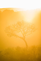 Sunrise and silhoutted acacia tree, iMfolozi Game Reserve, KwaZulu Natal, South Africa
