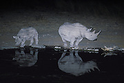 A black rhinoceros cow (diceros bicornis bicornis) and calf drink at the Halali waterhole in Etosha National Park. Rhino utilize the waterholes during the relative quiet of the evening and night hours. The stripes on the rhino's hide are caused by strobe lightiing and reflecting ripples from the water surface.