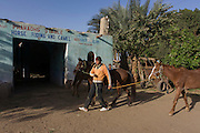 The owner of the Pharaohs Stable, a business dependent on tourism based in the village of Bairat on the West Bank of Luxor, Nile Valley, Egypt, leads his horses outside to feed.