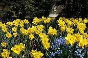 Spring flowers fill a yard as a bicyclist motors along N. Lake Drive near E. Hampton Avenue Monday. jeffrey phelps photo