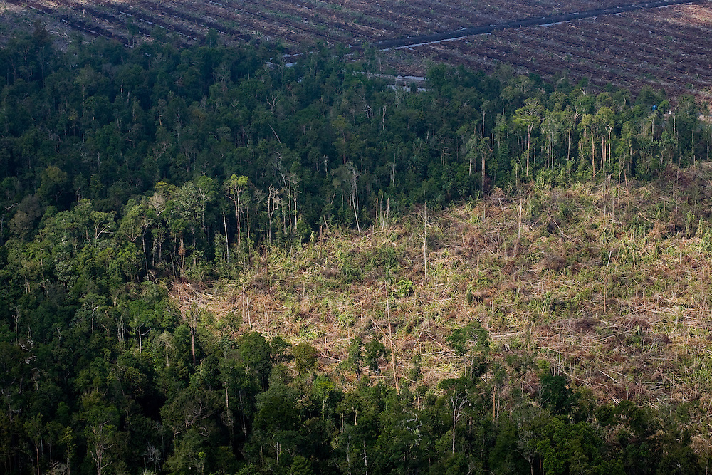 Logged areas south of Dayun, Sumatra, Indonesia, Aug. 30, 2008..Daniel Beltra/Greenpeace