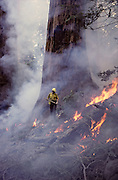 USA, California, Wildland Fire, Forest Fire, Sequoia and Kings Canyon National Park, Firefighter, Sequoia Tree, Smoke, Prescribed Fire