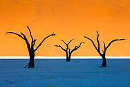 Tree silhouettes, Deadvlei, Namibia