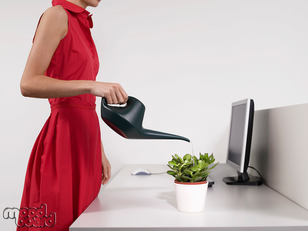 Female office worker watering desk plant