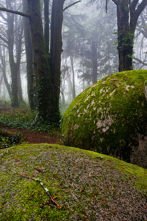 The landscape of Sintra-Cascais Natural park is not only made up of majestic ocean cliffsides. there are also woods in the Sintra range that are worth visiting, especially Peninha.