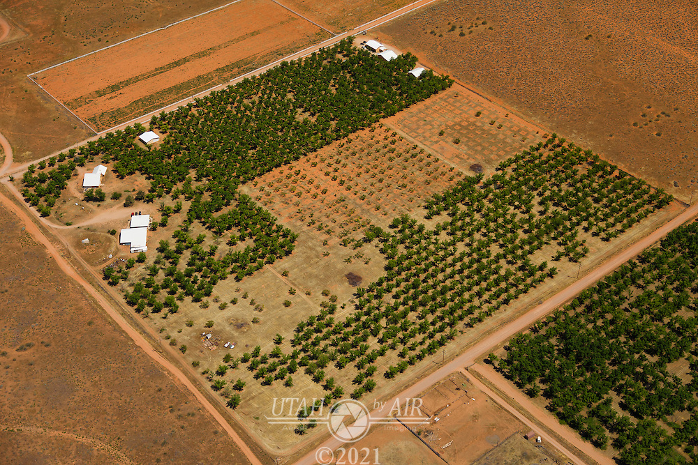 Tree farming in the  Southern Utah desert