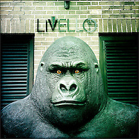 Gorilla sculpture, Newcastle, UK