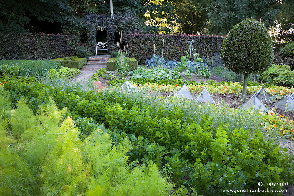 The vegetable garden at Ballymaloe Cookery school