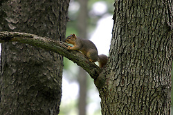 squirrel (Photo by Alan Look)