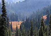 Sunlight Deep in Paradise Valley, Mt Rainier, Mt. Rainier National Park
