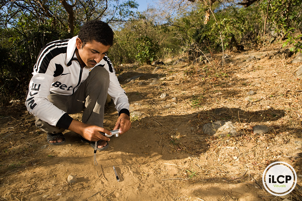 Arabian Leopard (Panthera pardus nimr) researcher Waleed Al'Rail photographing track, Hawf Protected Area, Yemen