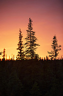 A vivid sunset fills the sky with color as silhouetted spruce trees stand in the foreground of Wrangell St. Elias National Park, Alaska.